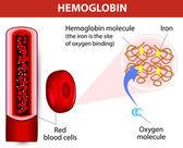 Molecule haemoglobin — Stock Vector