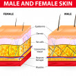 Skin male and female — 图库矢量图片