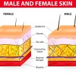 Skin male and female — Stockvectorbeeld