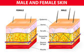 Skin male and female — Vector de stock