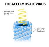 Tobacco mosaic virus — Stock Vector