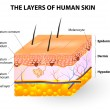 Layers of human skin. Melanocyte and melanin — Stock Vector