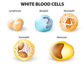 Types of White blood cells — Stock Vector