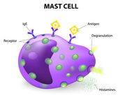 Mast cell or a mastocyte, labrocyte — Stock Vector
