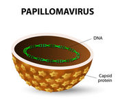 Human papilloma virus. HPV — Vetorial Stock