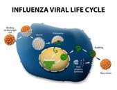 Influenza Virus Replication Cycle — Stock Vector