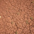 Drought — Stock Photo #13692584