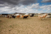 Mongolia — Stock Photo