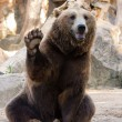 Brown bear hello — Stock Photo #27321131