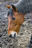 Horse without pasture — Stockfoto