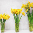 Three narcissus in vase — Stock Photo