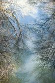Arbres se reflètent sur la rivière — Stockfoto