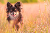 微笑的狗 — 图库照片