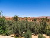 Kasbah du désert — Photo