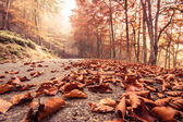 Autumn beech road — Stock Photo