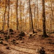 Autumn beech — Stock Photo #31133803