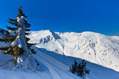 No inverno de pinho — Foto Stock