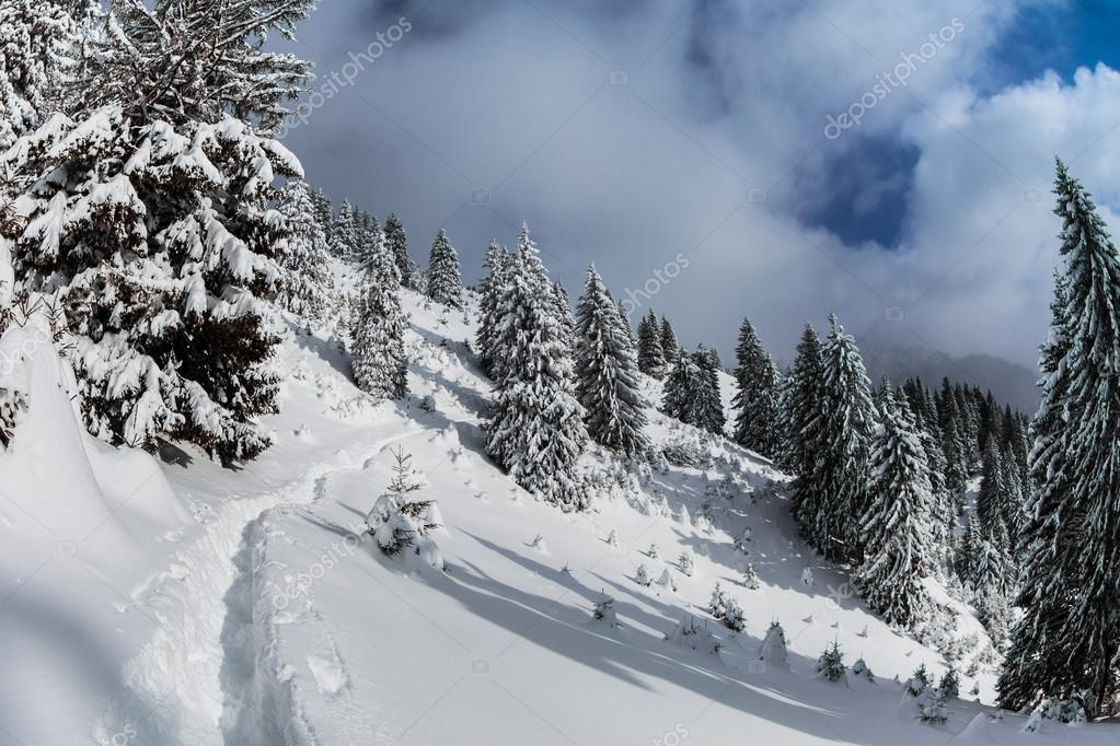 Forest with pines in winter. The Ciucas Mountains, Romania — Stock Photo #15681083