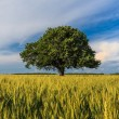 Single tree in spring — Stock Photo