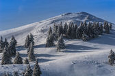 Winter landscape in the Carpathian Mountains — Stock Photo
