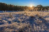 在冬天的日出 — 图库照片