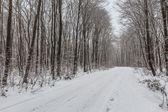 Rustic road in winter — Stock Photo