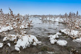 Comana Lake in winter — Stock Photo