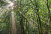 Sun fog in forest — Stock Photo