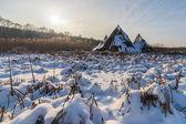 Lago comana en invierno — Foto de Stock