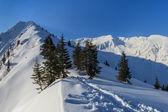 Sosny w zimie — Zdjęcie stockowe