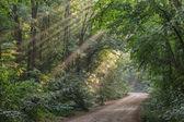 Słońce mgłę w lesie — Zdjęcie stockowe