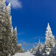 Forest with pines in winter — Stock Photo #8890560