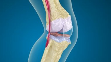 Osteoporosis of the knee joint. — Stock Video
