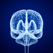 Brain scan, X-ray , front view — Stock Photo