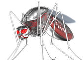 Mosquito. Robot bloodsucker. Isolated on white. — Stock Photo