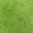 Lawn green grass texture  — Foto de Stock