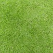 Lawn green grass texture — Stock Photo
