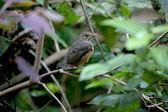 Baby bird on branch — Stock Photo