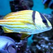 Colorful fish in the aquarium — Foto de Stock