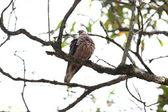 Bird on branch — Stock Photo