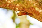 Bird in tree — Stock Photo