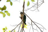 Green parakeet on twig — Stock Photo