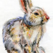 Beautiful watercolor rabbit — Stock Photo #43303513