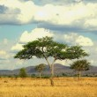 Stock Photo: Tree in savanna