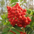 Stock Photo: Red rowred berry