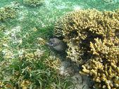 Moray varied in the sea — Stockfoto
