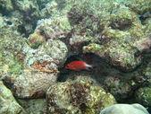 Stone fish in the bottom of sea — Zdjęcie stockowe