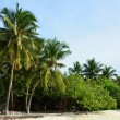 White sand with coconut palms of Indian ocean Maldives — Stock Photo #45972805