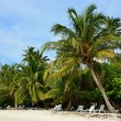 White sand with coconut palms of Indian ocean Maldives — Stock Photo #45972861