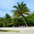 White sand with coconut palms of Indian ocean Maldives — Stock Photo #45972881